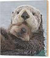 Female Sea Otter Holding Newborn Pup Wood Print