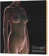 Female Surface Anatomy Wood Print