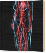 Female Vascular System Wood Print