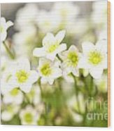 Field Of White Blossoms Wood Print