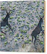Fish River Protected Area, Australia Wood Print