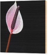 Flamingo Flower  Wood Print