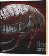 Flea Pulex Irritans Wood Print