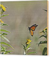 Flight Of The Monarch Wood Print by Thomas Bomstad
