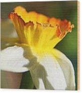 Floral Cup  Wood Print