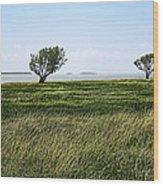 Florida Bay Everglades Wood Print