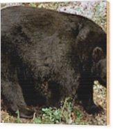 Florida Black Bear Wood Print