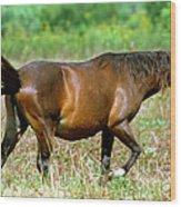 Florida Spanish Horse Wood Print