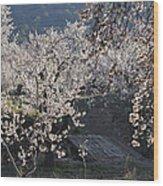 Flowering Almond Wood Print