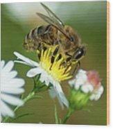 Flowering Bee Wood Print