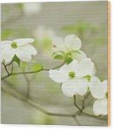 Flowering Dogwood (cornus Florida) Wood Print