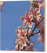 Flowering Peach Tree Wood Print