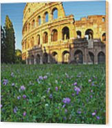 Flowers At The Coliseum Wood Print