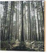Forest Wood Print by Bernard Jaubert