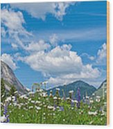 Franconia Notch - Lupine And Daiseys  Wood Print