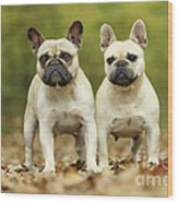 French Bulldogs Wood Print