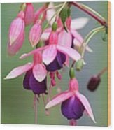 Fuchsia Named Lambada Wood Print