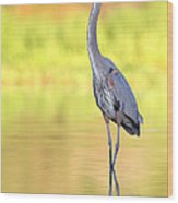 Gbh At First Light Wood Print