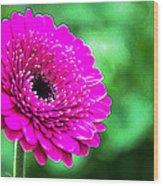 10188 Purple Gerbera Wood Print