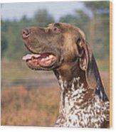 German Short-haired Pointer Dog Wood Print