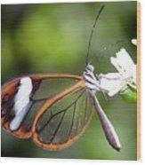 Glasswing Butterfly Wood Print