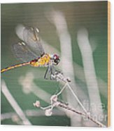 Golden Dragonfly Wood Print