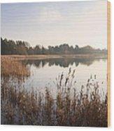 Golden Reeds Wood Print