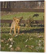 Golden Retriever Pup Wood Print by Linda Freshwaters Arndt