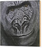 Gorilla Portrait Wood Print by David Hawkes