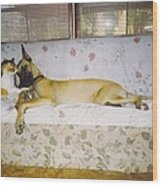 Great Dane And Calico Cat Wood Print