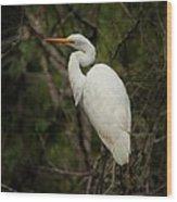 Great Egret Wood Print