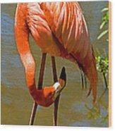 Greater Flamingo Wood Print