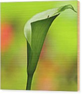 Green Calla Lily Wood Print