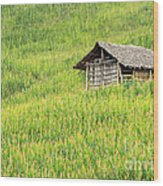 Green Corn Field Wood Print