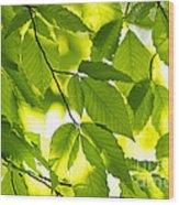 Green Spring Leaves Wood Print