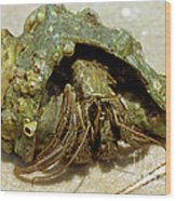 Green Striped Hermit Crab Wood Print