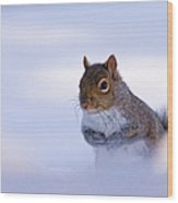 Grey Squirrel In Snow Wood Print by Jeff Sinon