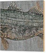 Gyotaku - Striped Bass - Rock Fish - Striper Wood Print