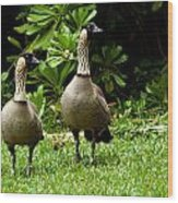 2 Hawaiian Nene Geese Wood Print