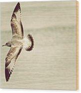 Herring Gull In Flight Wood Print by Karol Livote