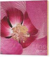 Hibiscus Moscheutos Named Luna Pink Swirl Wood Print