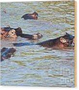 Hippopotamus Group In River. Serengeti. Tanzania. Wood Print