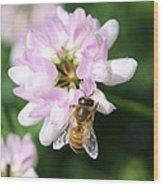 Honeybee On Crown Vetch Wood Print