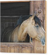 Horse In Stable Wood Print