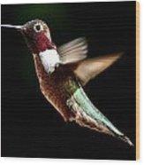 Hummingbird Male Anna Wood Print