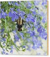Hummingbird Moth Wood Print