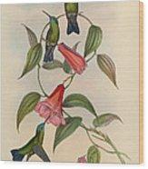 Hummingbirds Wood Print by Philip Ralley