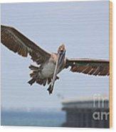 Incoming Pelican Wood Print