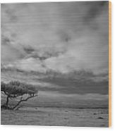 Infrared Picture Of Nature Areas In The Netherlands Dwingelderveld Wood Print