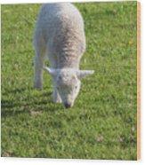 Ireland, County Kerry, Slea Head Drive Wood Print